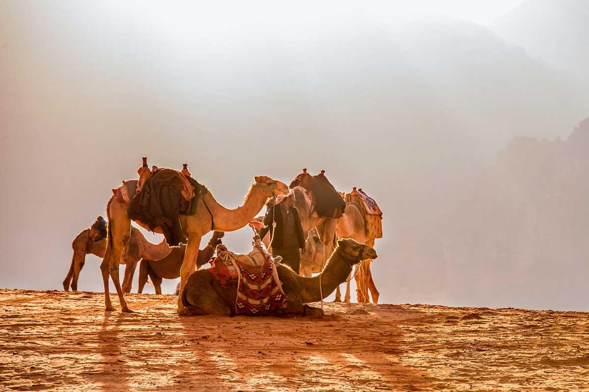 Dromadaire-Desert